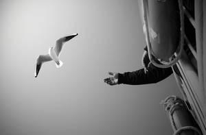 seagull by bermek