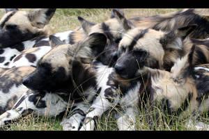 Let sleeping dogs lie by InsaneGelfling