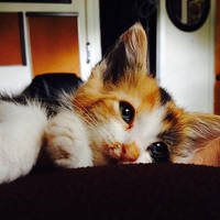 Peaches 5 weeks old 3 by feariedaisy