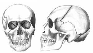 Skulls by eugeal