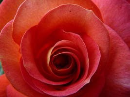 Deep Inside the Rose by eugeal