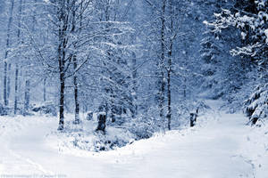 Winter Wonderland by DavidGrieninger