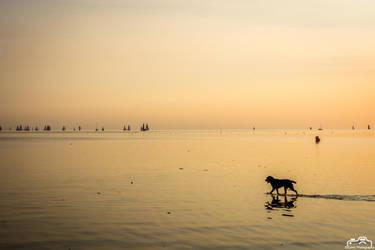Doggy Beach Sunset by SIG442