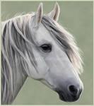 Random Horse Portrait II by Aisling88