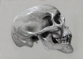 Skull Study by benke33