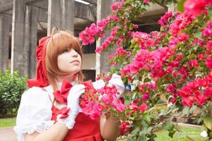 Sakura Flower by mahnway