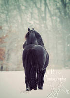 A winter Tail by LarissaAllen