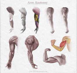 Arm Anatomy by Azot2018