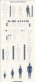 Anatomy Basic Shapes by Azot2018