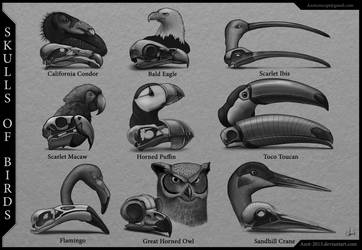Skulls of Birds by Azot2019