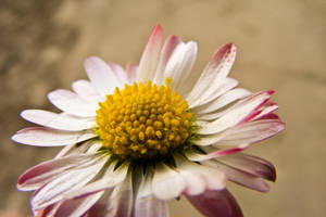 Wild Flower by AlexAnaPhotography