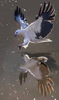kite study by dantevirgil