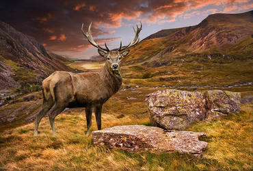Scotland by cookingmary