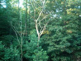 Trees from the Train by steward
