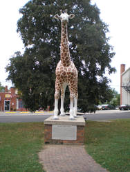 Delavan Giraffe by steward