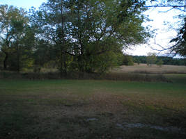 Field and trees by steward