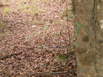Snake in the leaves by steward