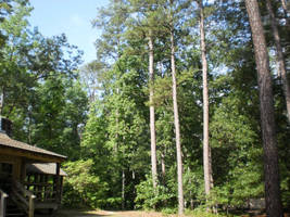 Teaching lodge in the woods by steward