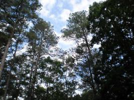 Glorious canopy by steward