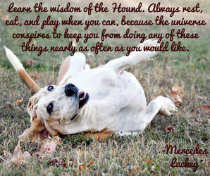 Wisdom of the Hound by steward