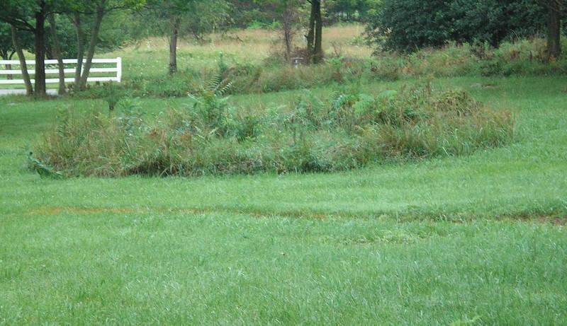 SHWC2006: Wild Garden Closeup by steward