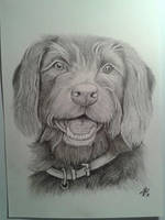 Shaggy Dog by davidsteeleartworks