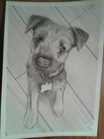 Cute little dog by davidsteeleartworks