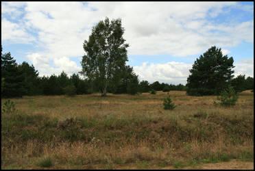 Heide und Wald by Adarion