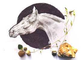 The head of horse by Kantaka1