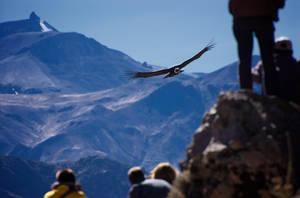 Condor Approaching by Jaap-Schouten
