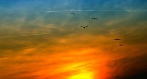 The flight by Sv3tac