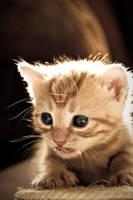 Photo - Tasty II by tigaer