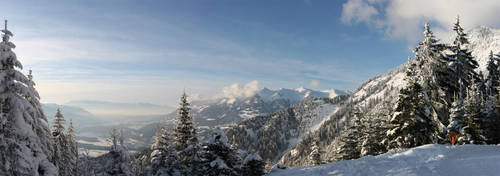 Photo - Austrian I by tigaer