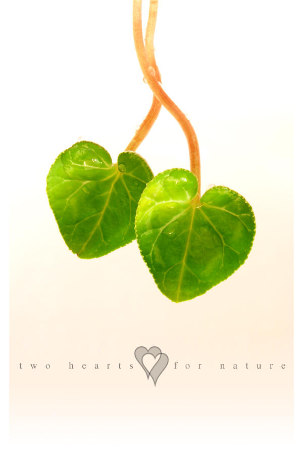Photo - Hearts For Nature by tigaer