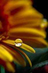 Photo - Captured Beauty XXII by tigaer