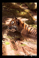 Photo - Le Tigre II by tigaer