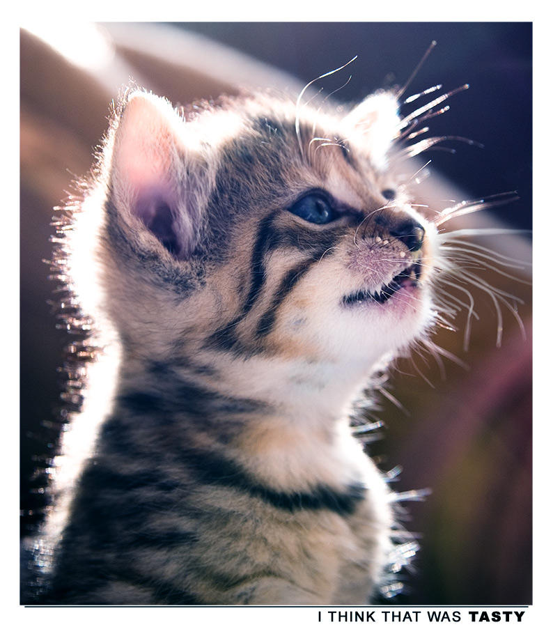 Photo - Tasty by tigaer