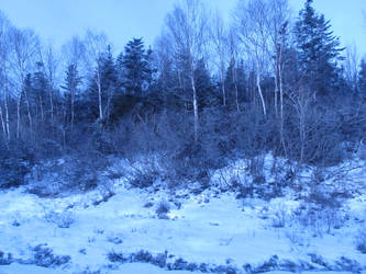 Another Winter Scene by Faithersness