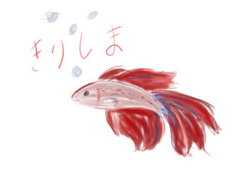 Kirishima the betta fish by kittensmittins