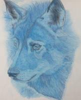 Blue wolf by seakliff