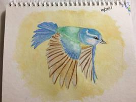 Birdy bird by seakliff