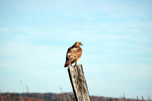 Hawk by fewofmany