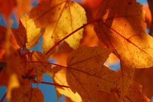Fall in New York by fewofmany