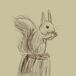 Squirrel - Observing Sketch by EmeraldBunny20