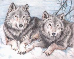 a fuzzy pair... by obiewolf