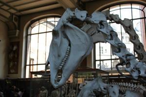 Horse skull 5 by CitronVertStock