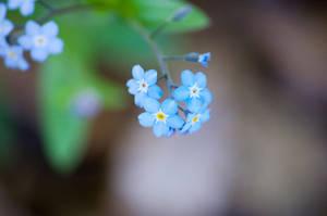 Wild Flowers 2 by toddyost