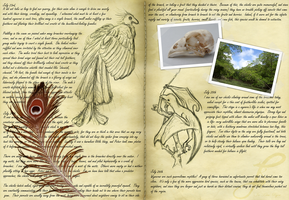 Fieldnotes: Red-Crested Wyvern by Ja-Kitsu-Ryou