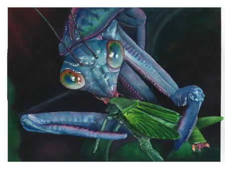 Masticating Mantis by BigNtasty