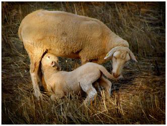 Motherhood by JoseMelim